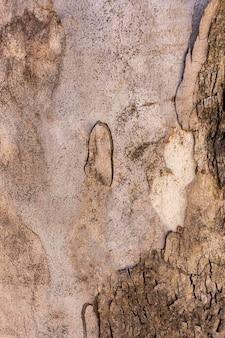 Vista frontal da superfície da casca da árvore