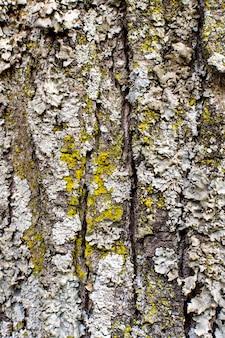 Vista frontal da textura da casca da árvore