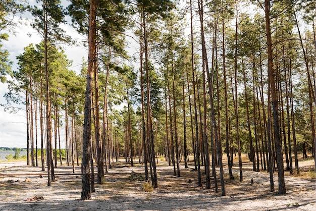 Vista frontal das árvores à luz do dia