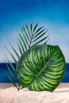 Vista frontal das folhas da planta na praia