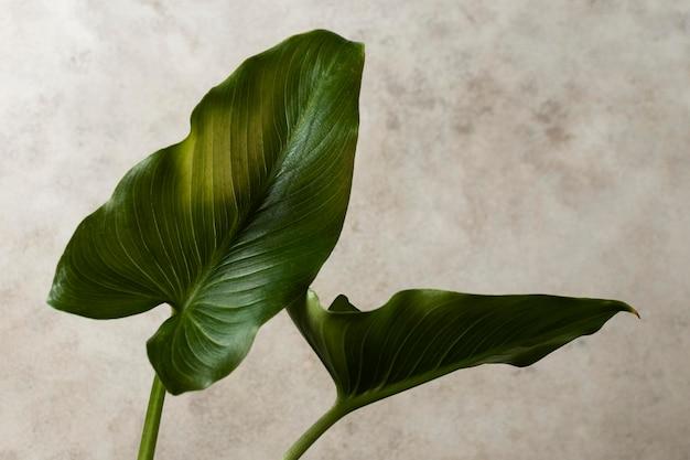 Vista frontal das folhas tropicais