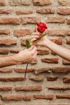 Vista frontal das mãos de casal segurando rosa
