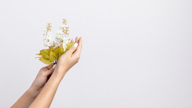 Vista frontal das mãos segurando flores com espaço de cópia