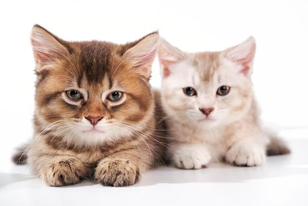 Vista frontal de dois gatinhos com sono.