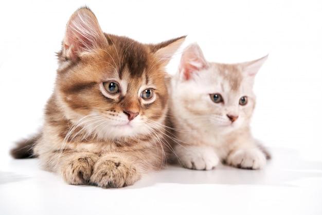 Vista frontal de dois gatos bebê.