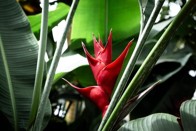Vista frontal de flor tropical heliconia