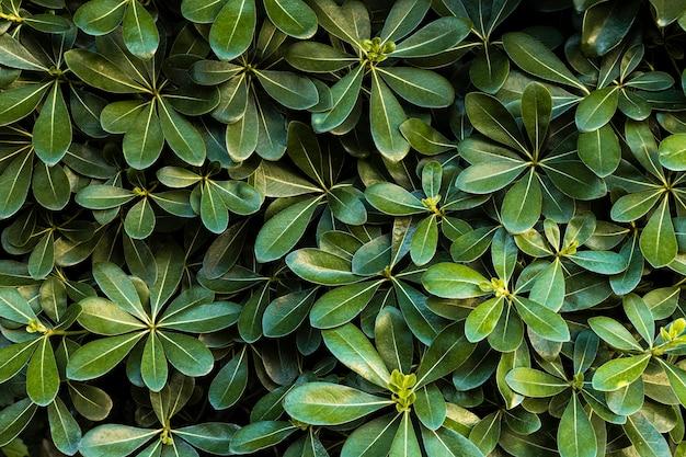 Vista frontal de folhas verdes