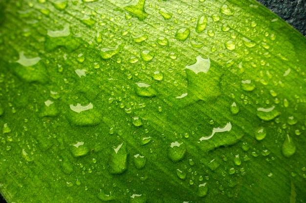 Vista frontal de perto folha verde com gotas na árvore de cor escura da floresta de orvalho verde ar