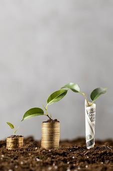 Vista frontal de plantas com moedas empilhadas na terra e notas
