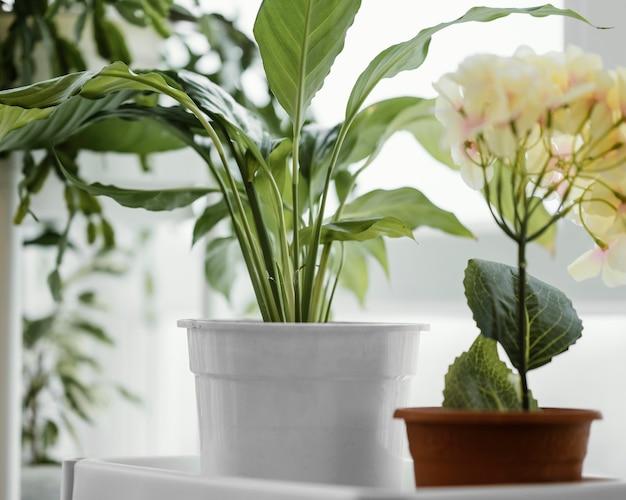 Vista frontal de plantas internas em vasos ao lado da janela