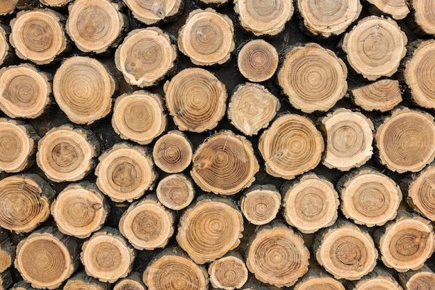 Vista frontal de troncos de árvores