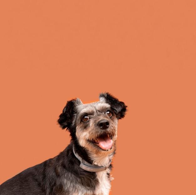 Vista frontal de um filhote de cachorro fofo de raça mista com espaço de cópia