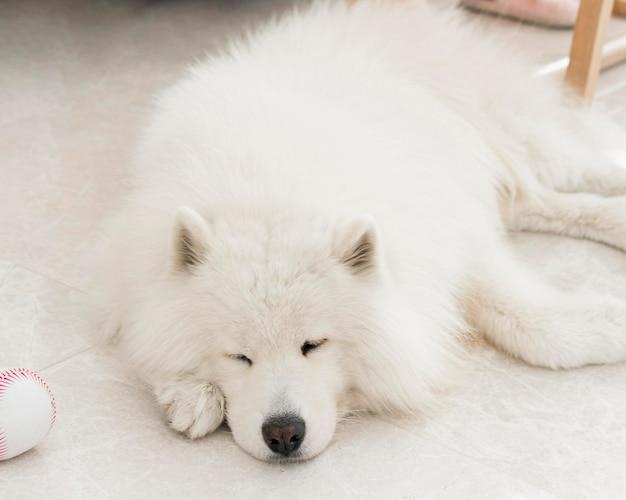 Vista frontal de um lindo cachorro adorável