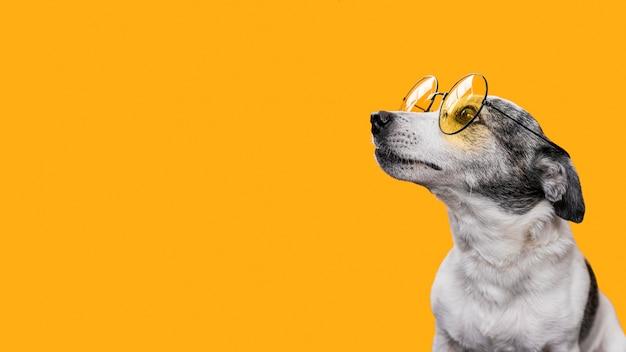 Vista frontal de um lindo cachorro com espaço de cópia
