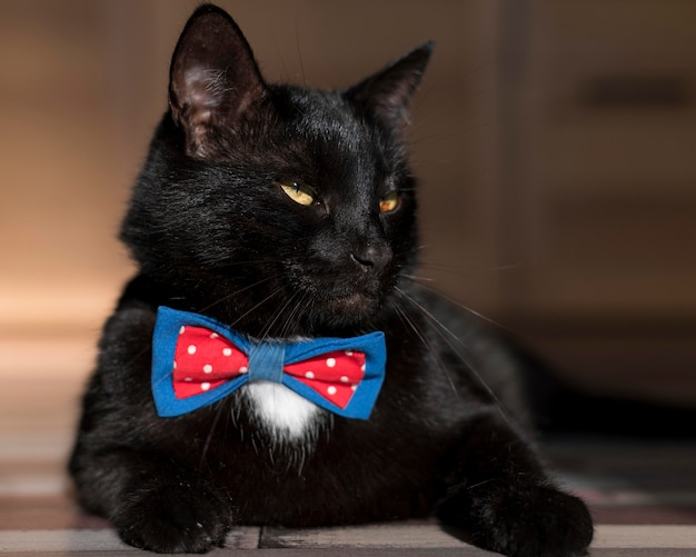 Vista frontal de um lindo gato preto com gravata borboleta