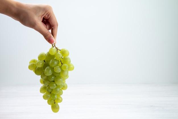 Vista frontal de uvas verdes frescas em mãos femininas na superfície branca de frutas, vinho, suco fresco e maduro