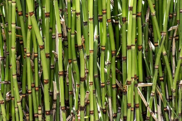 Vista frontal de varas de bambu