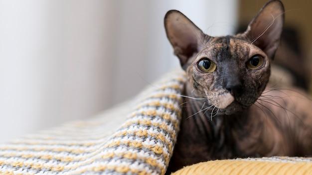 Vista frontal do belo conceito de gato