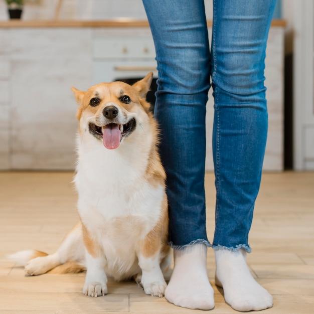 Vista frontal do cachorro sentado ao lado do proprietário