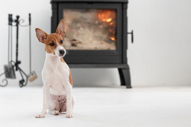 Vista frontal do cão adorável com lareira