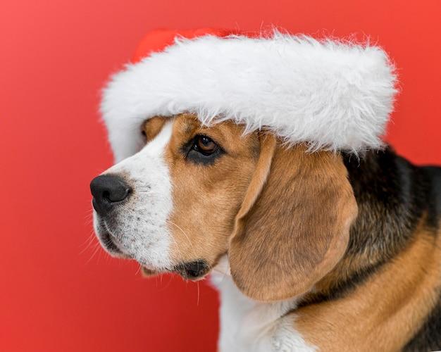 Vista frontal do conceito de cachorro fofo engraçado