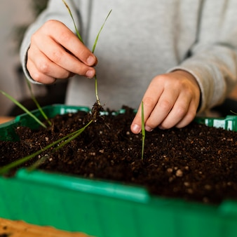 Vista frontal do menino plantando brotos em casa