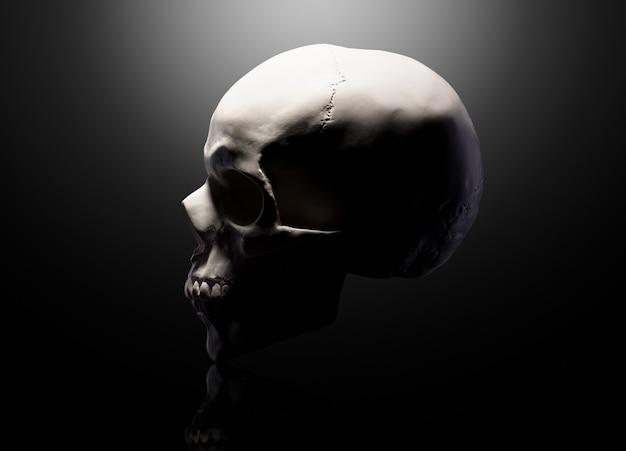 Vista frontal do modelo de gesso do crânio humano isolado em um fundo preto com traçado de recorte