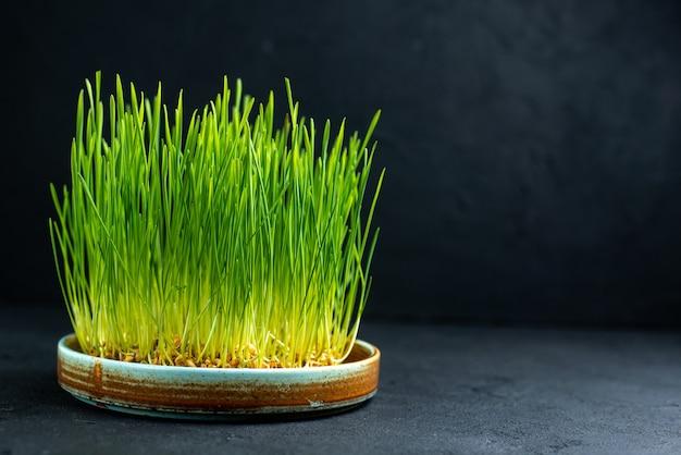 Vista frontal do semeni do feriado verde na superfície escura