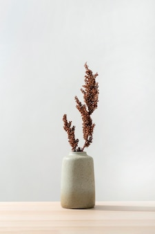 Vista frontal do vaso com planta