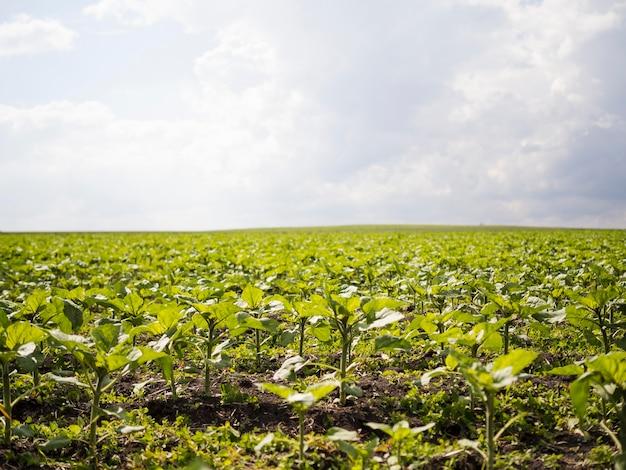 Vista frontal fazenda campo paisagem
