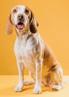 Vista frontal feliz cachorro saindo da língua