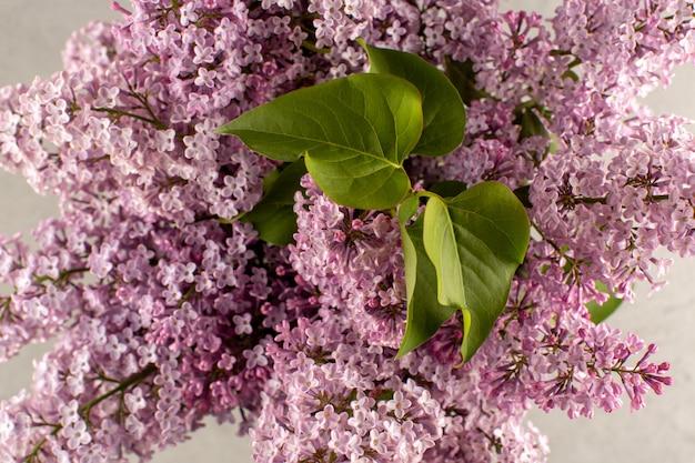 Vista frontal flores roxas bela vista no chão branco