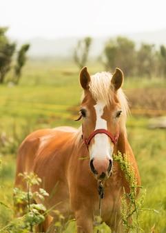 Vista frontal lindo cavalo marrom