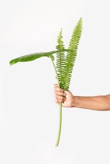 Vista frontal mãos segurando uma planta de folhagem