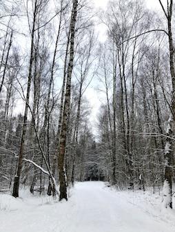 Vista frontal paisagem da floresta de inverno