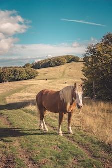 Vista hipnotizante de um cavalo selvagem no prado