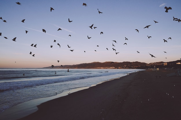 Vista hipnotizante de uma praia com pássaros voando sobre ela