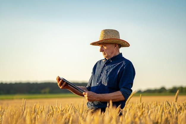 Vista incrível com o homem que verifica a colheita orgânica natural à luz do sol. chapéu de palha na cabeça do fazendeiro.