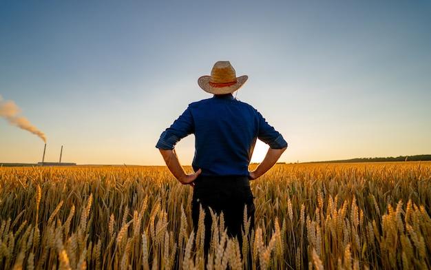 Vista incrível com o homem que verifica a colheita orgânica natural à luz do sol.