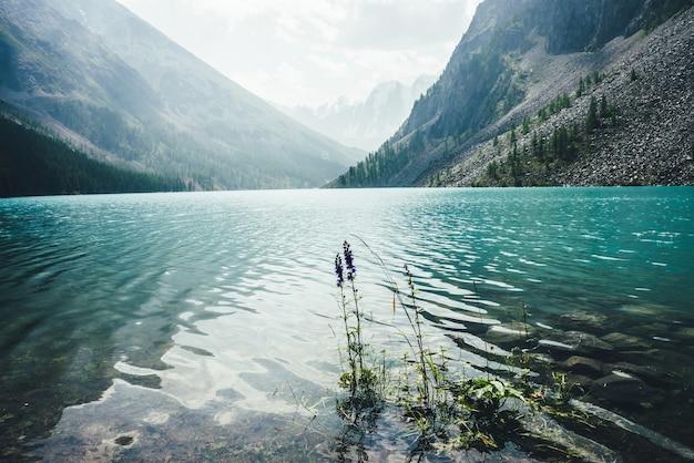 Vista incrível para ondulações meditativas nas águas calmas e cristalinas do lago da montanha