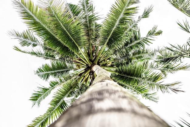 Vista inferior da palmeira