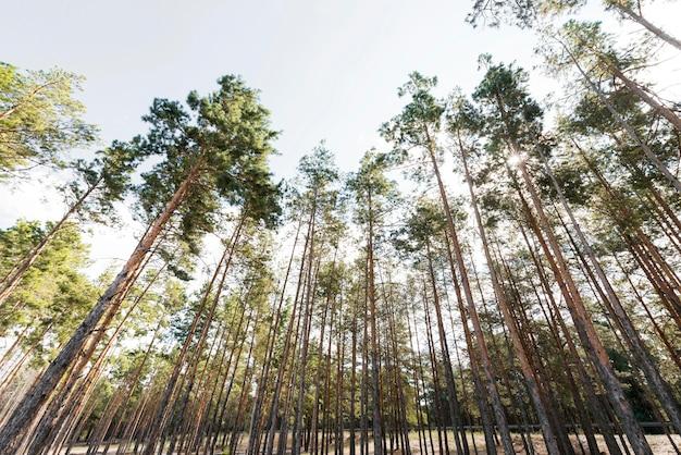 Vista inferior das árvores à luz do dia