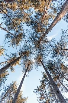Vista inferior das árvores da floresta