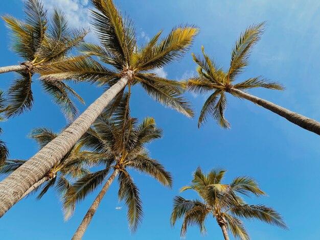 Vista inferior de coqueiros contra um céu azul com nuvens