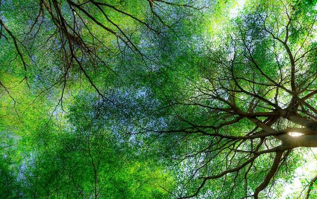 Vista inferior de galhos de árvores e folhas verdes de árvore na floresta tropical com luz solar.
