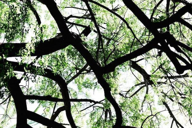 Vista inferior de galhos de árvores