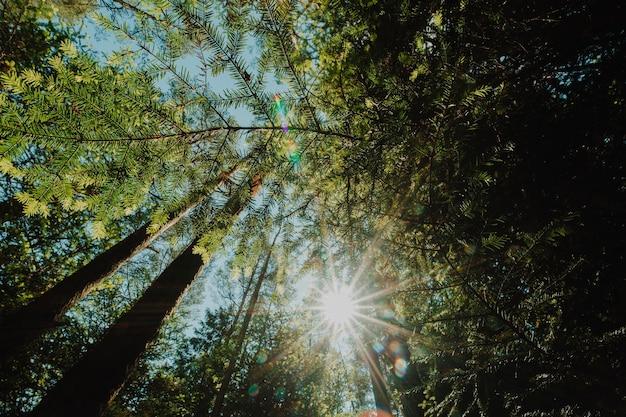 Vista inferior de um grupo de árvores