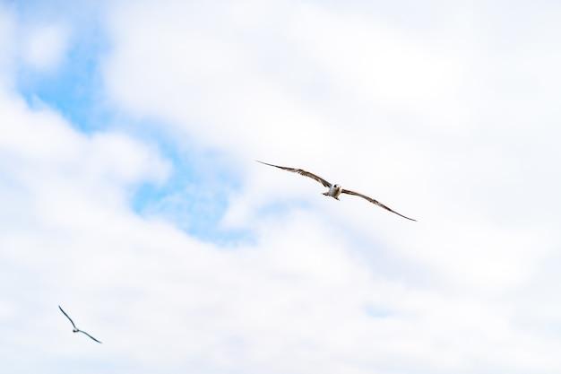 Vista inferior de uma gaivota voando no céu nublado