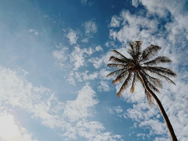Vista inferior de uma palmeira de coco contra um céu azul nublado.