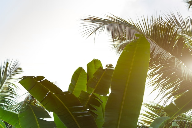 Vista inferior folhas de coqueiros e bananas
